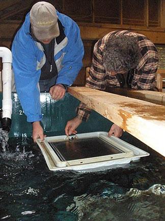 Salmon hatchery tanks