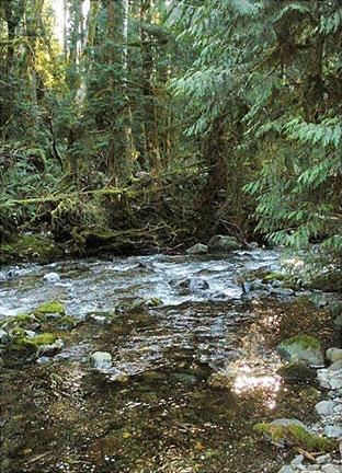 Habitat restoration of Charters Creek