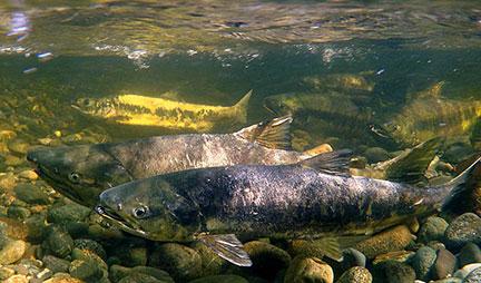 Programs at Charters River Salmon Interpretive Centre
